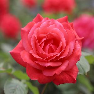 Sainte Fleur de l'Avière